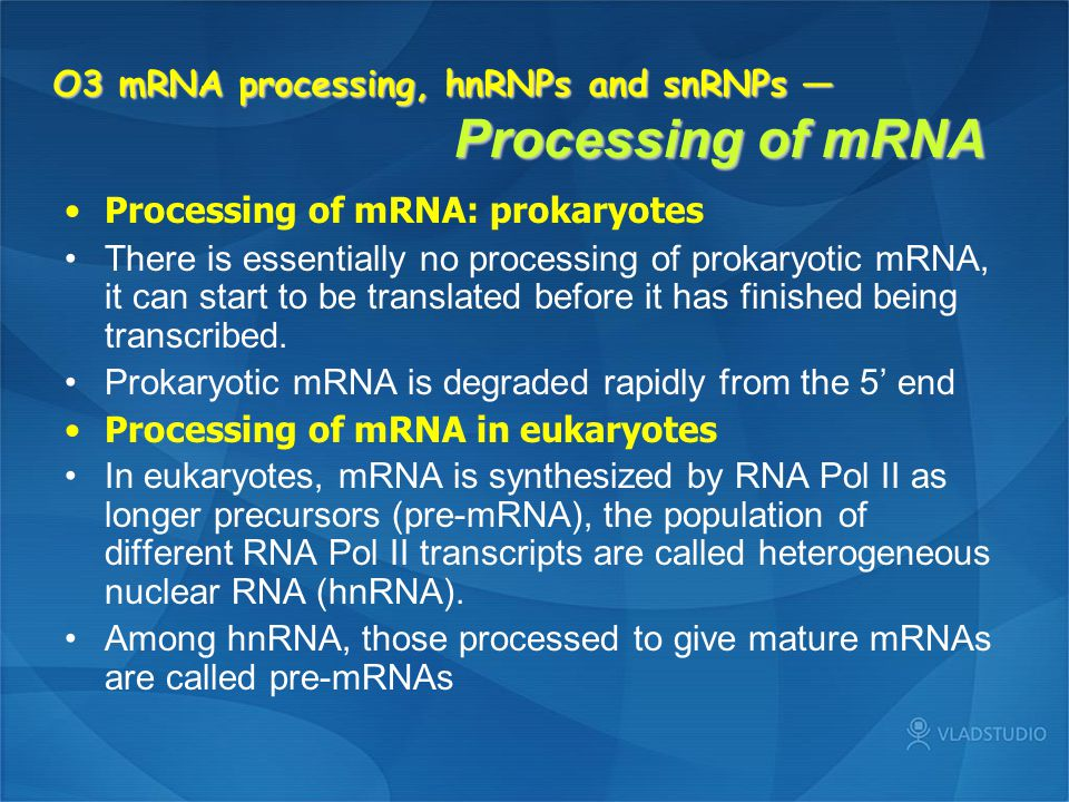 O3 mRNA processing, hnRNPs and snRNPs — Processing of mRNA