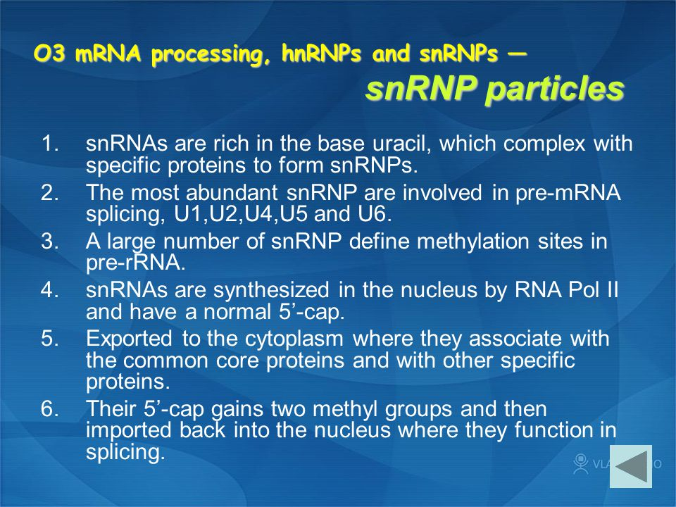 O3 mRNA processing, hnRNPs and snRNPs — snRNP particles