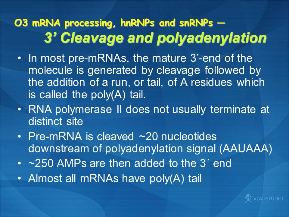 RNA polymerase II does not usually terminate at distinct site