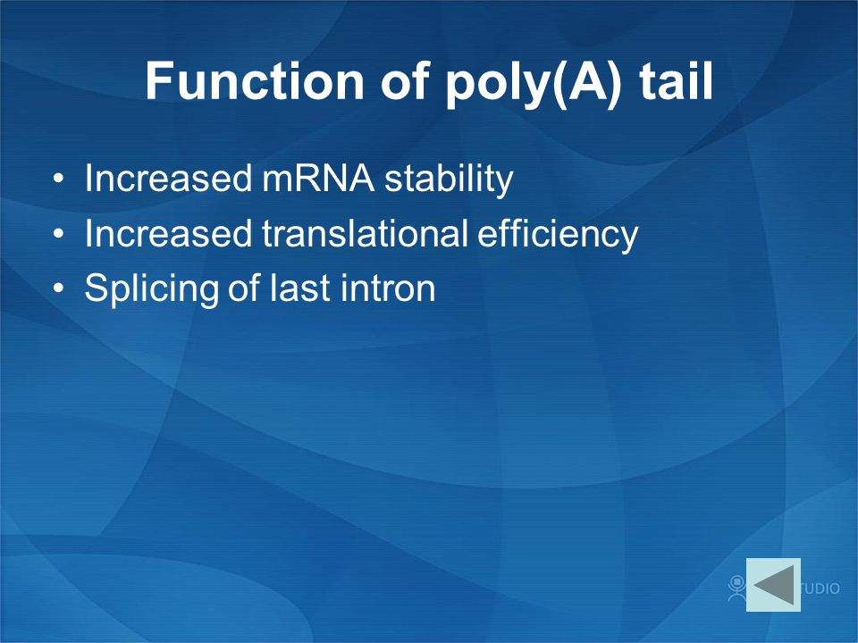 Function of poly(A) tail