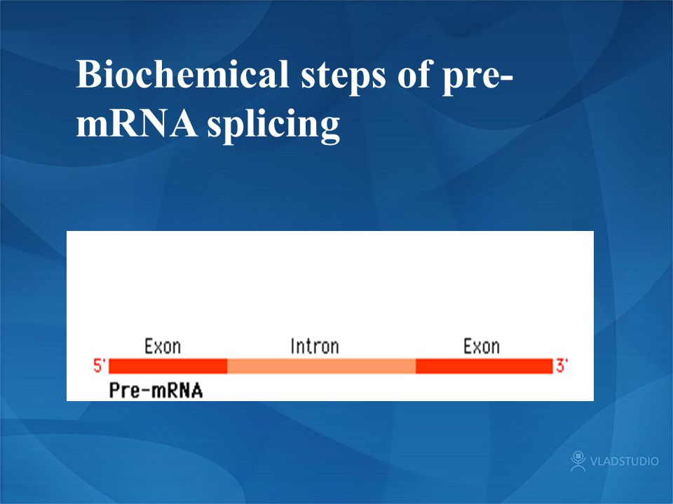 Biochemical steps of pre-mRNA splicing