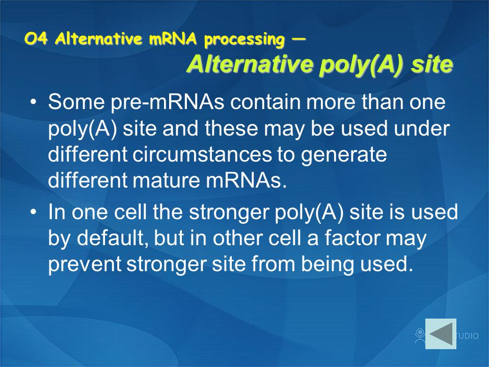 O4 Alternative mRNA processing — Alternative poly(A) site