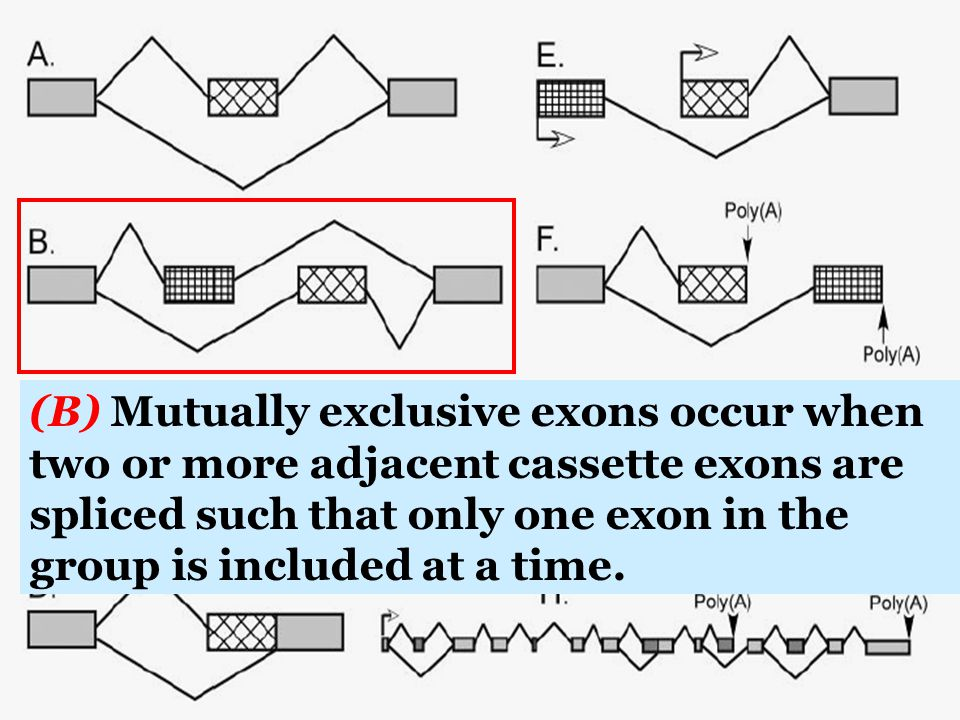 (B) Mutually exclusive exons occur when two or more adjacent cassette exons are spliced such that only one exon in the group is included at a time.