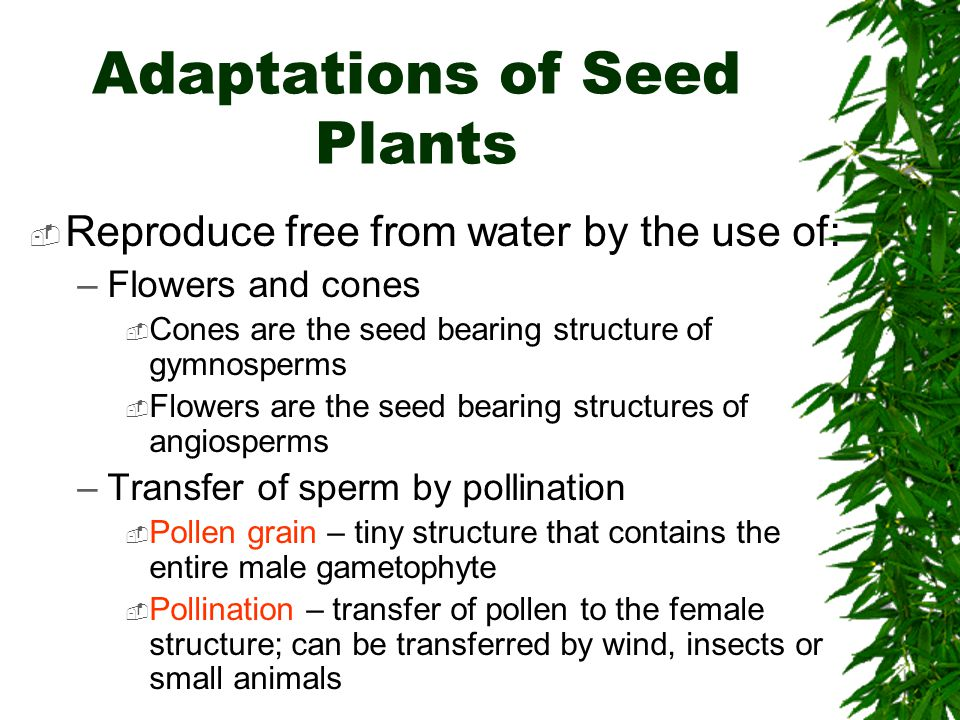 Adaptations of Seed Plants