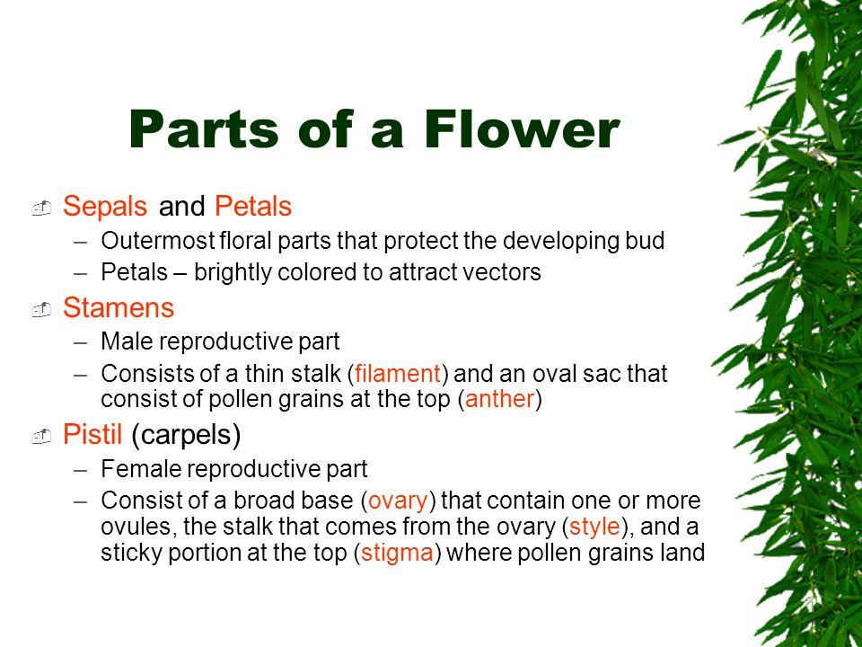 Parts of a Flower Sepals and Petals Stamens Pistil (carpels)