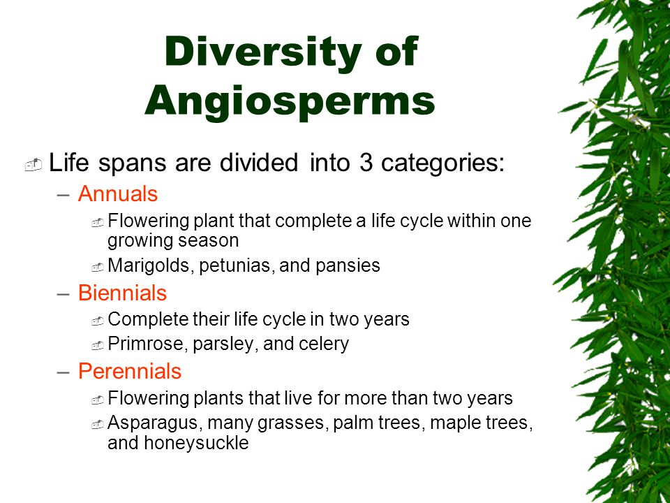 Diversity of Angiosperms