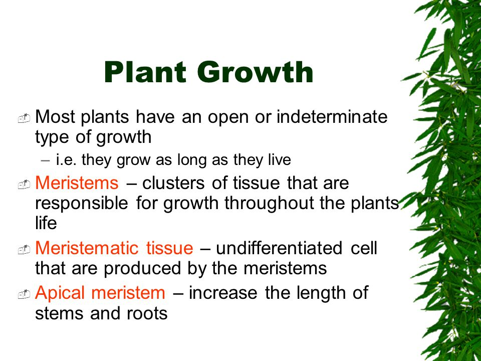 Plant Growth Most plants have an open or indeterminate type of growth