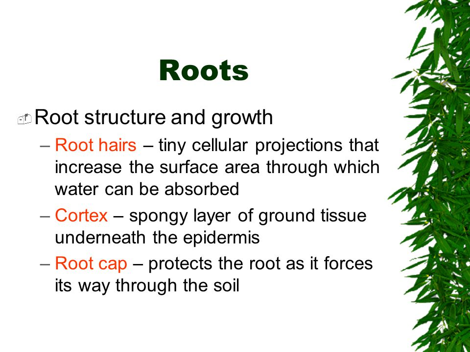 Roots Root structure and growth