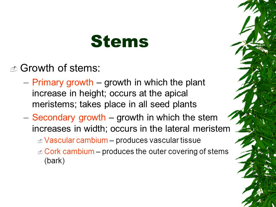 Stems Growth of stems: Primary growth – growth in which the plant increase in height; occurs at the apical meristems; takes place in all seed plants.