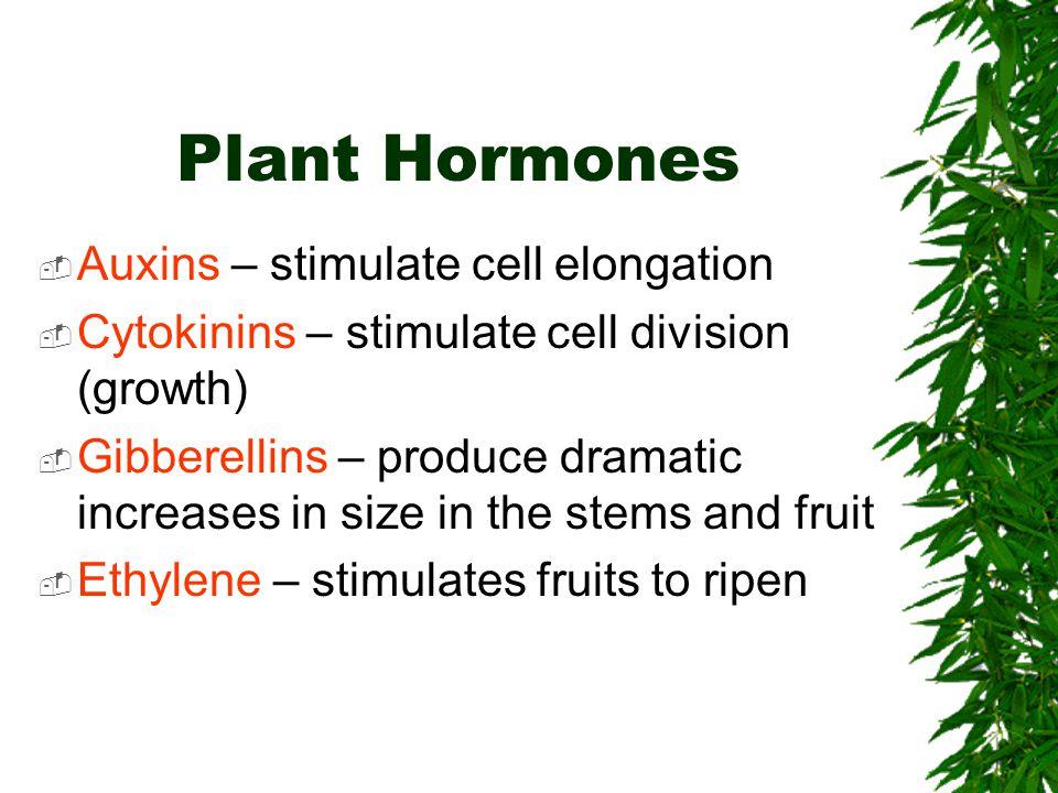 Plant Hormones Auxins – stimulate cell elongation
