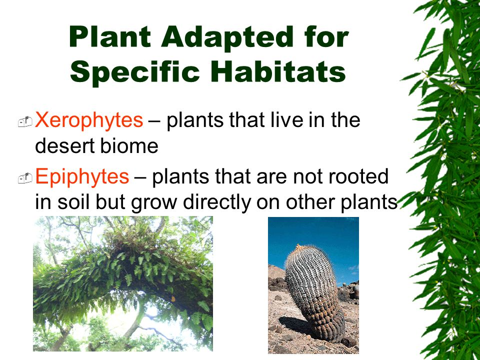 Plant Adapted for Specific Habitats