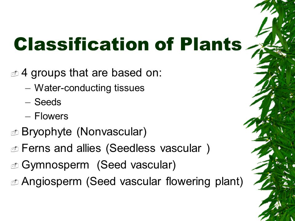 Classification of Plants
