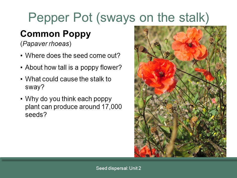 Pepper Pot (sways on the stalk)