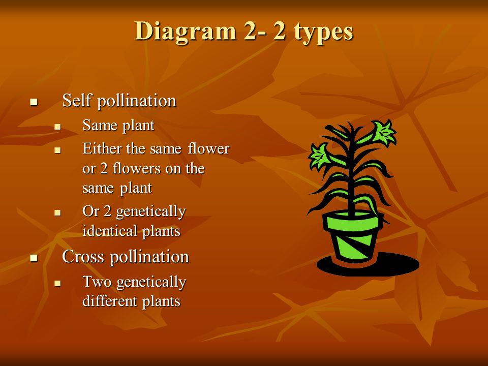 Diagram 2- 2 types Self pollination Cross pollination Same plant