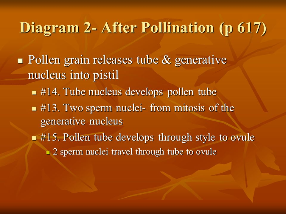 Diagram 2- After Pollination (p 617)