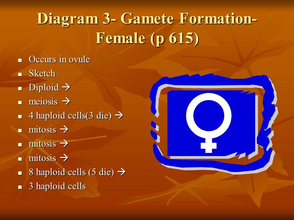 Diagram 3- Gamete Formation- Female (p 615)