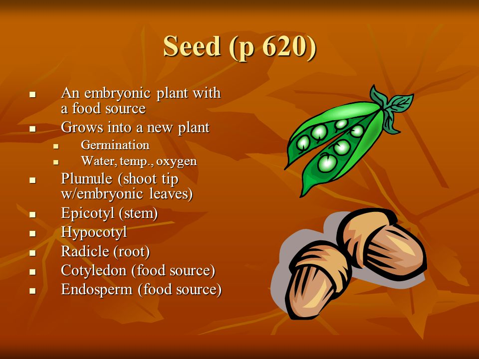 Seed (p 620) An embryonic plant with a food source
