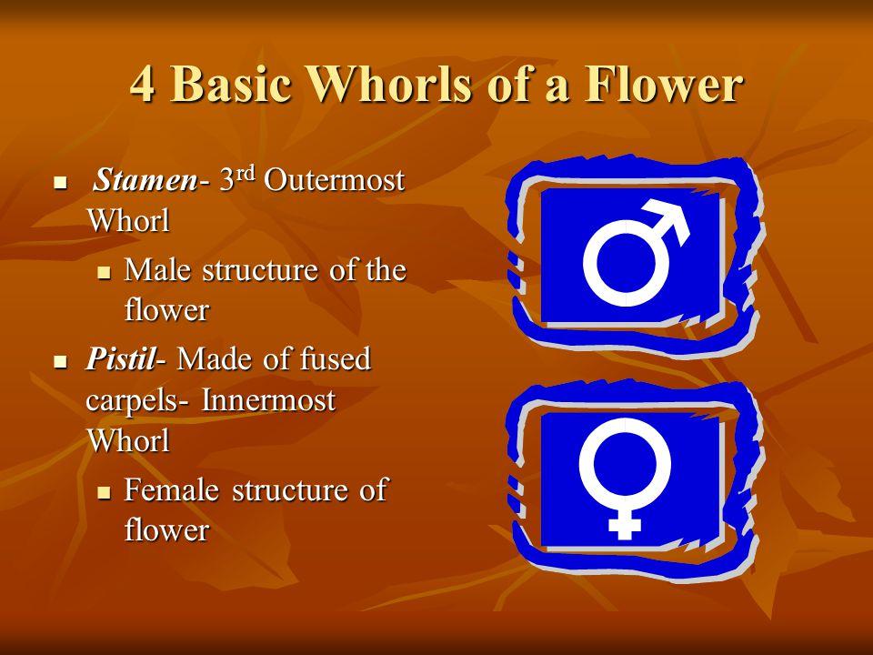 4 Basic Whorls of a Flower