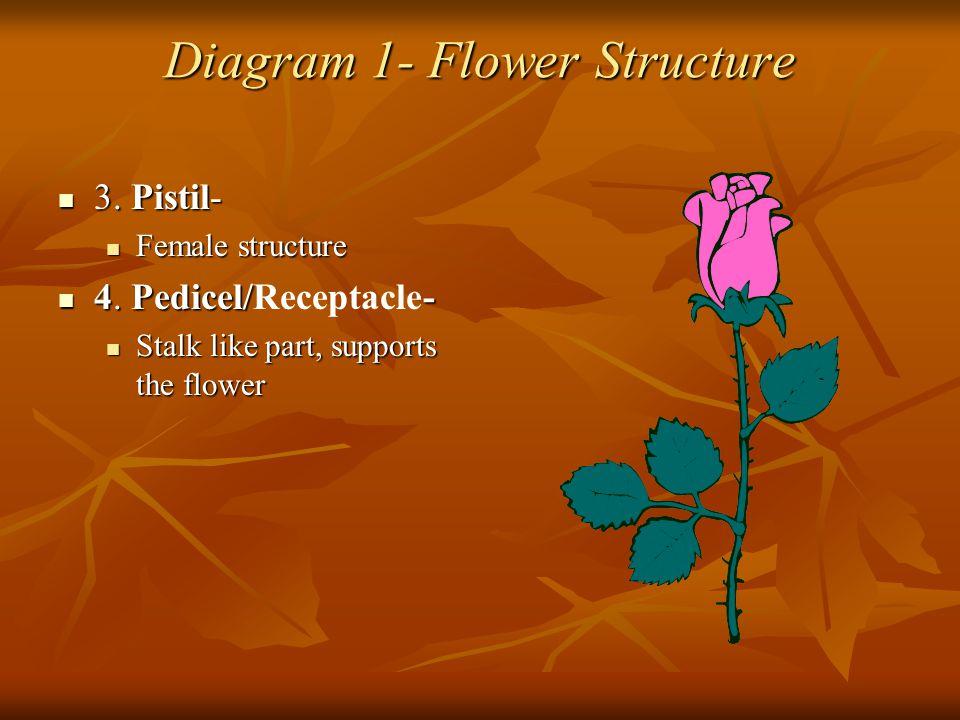 Diagram 1- Flower Structure