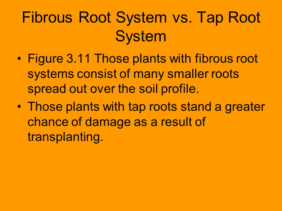 Fibrous Root System vs. Tap Root System