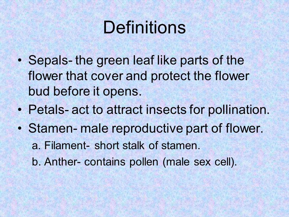 Definitions Sepals- the green leaf like parts of the flower that cover and protect the flower bud before it opens.