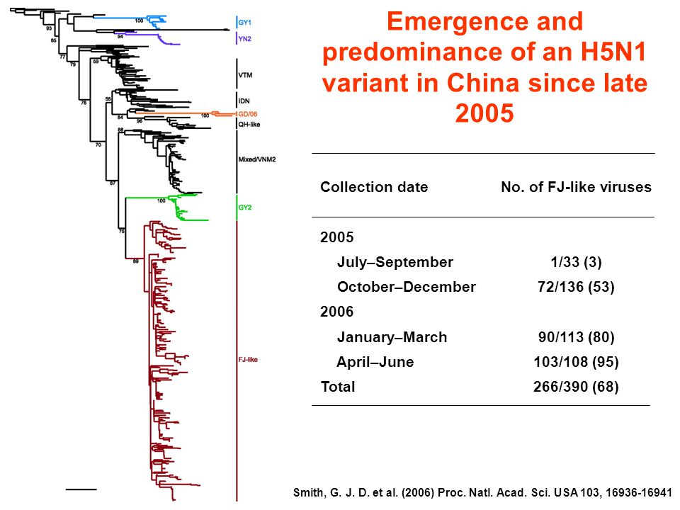 Emergence and predominance of an H5N1 variant in China since late 2005