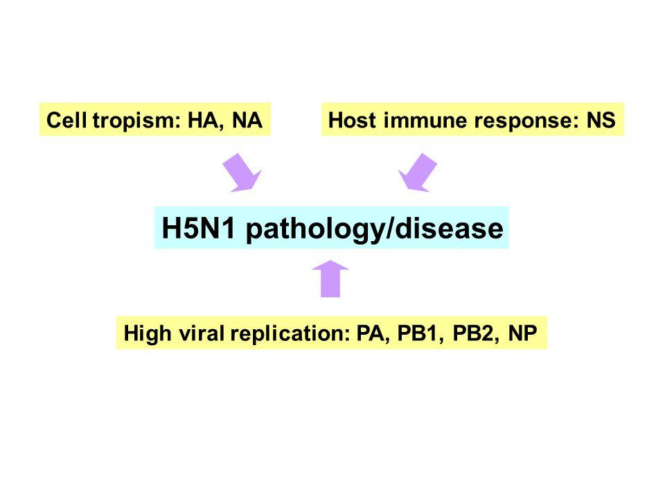H5N1 pathology/disease Cell tropism: HA, NA Host immune response: NS