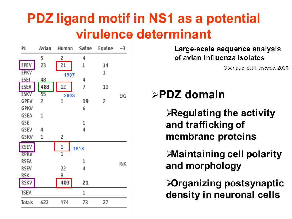 PDZ ligand motif in NS1 as a potential virulence determinant