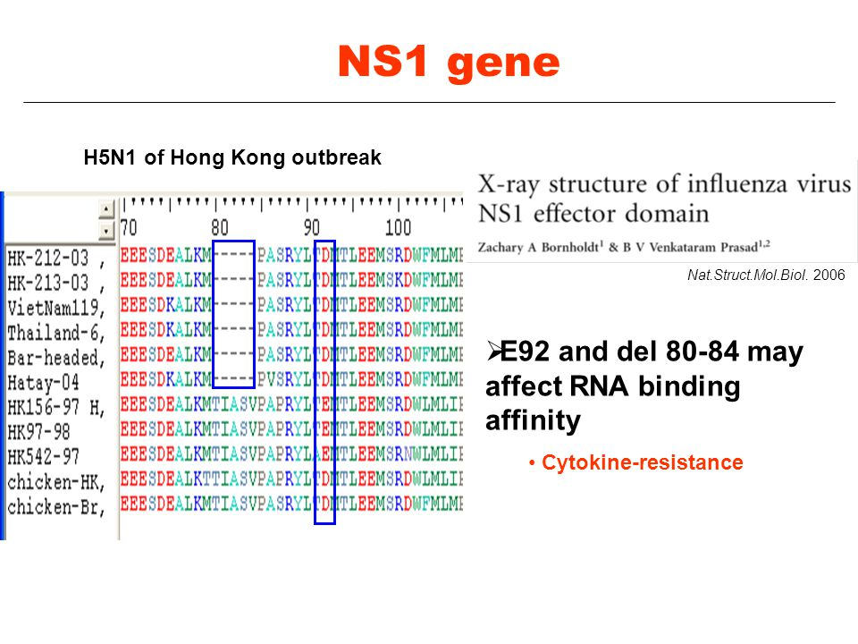 NS1 gene E92 and del 80-84 may affect RNA binding affinity
