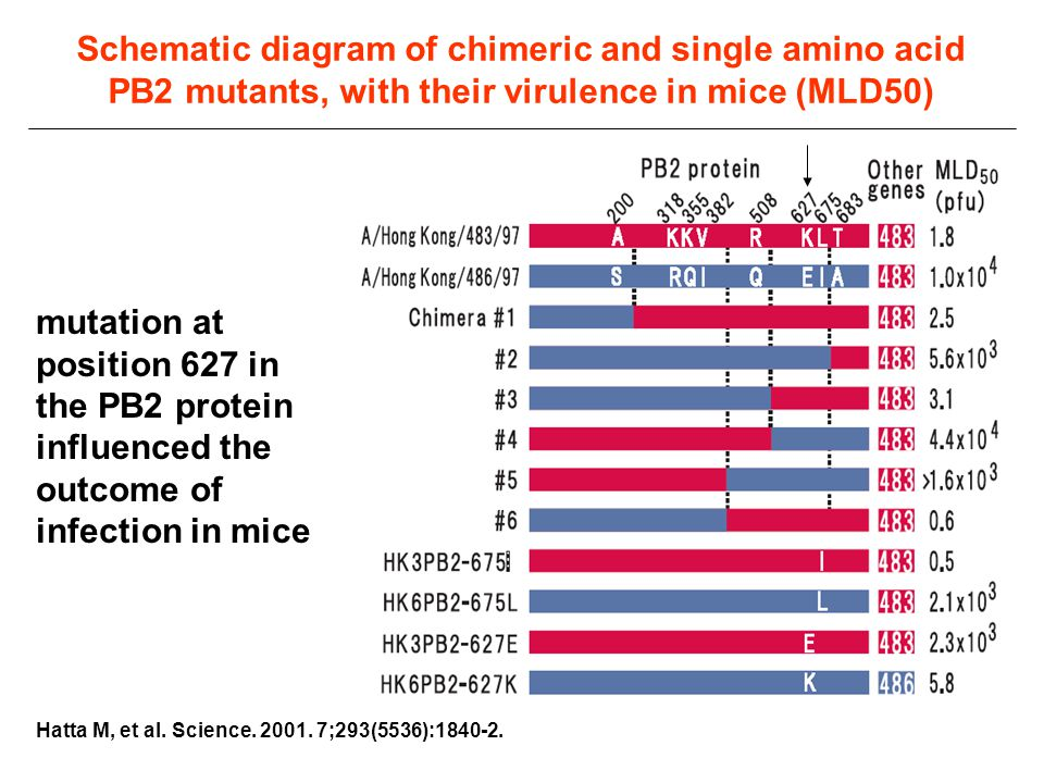 Schematic diagram of chimeric and single amino acid PB2 mutants, with their virulence in mice (MLD50)