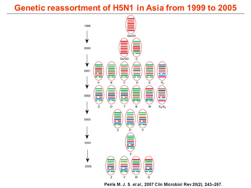 Genetic reassortment of H5N1 in Asia from 1999 to 2005