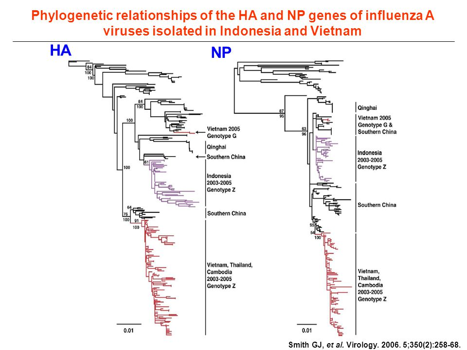 Phylogenetic relationships of the HA and NP genes of influenza A viruses isolated in Indonesia and Vietnam