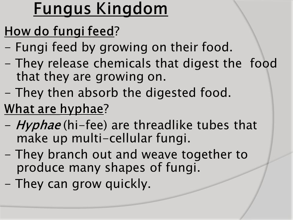 Fungus Kingdom How do fungi feed