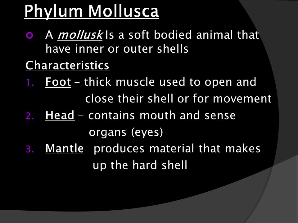 Phylum Mollusca A mollusk Is a soft bodied animal that have inner or outer shells. Characteristics.