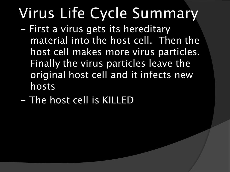 Virus Life Cycle Summary