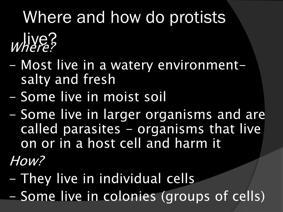 Where and how do protists live