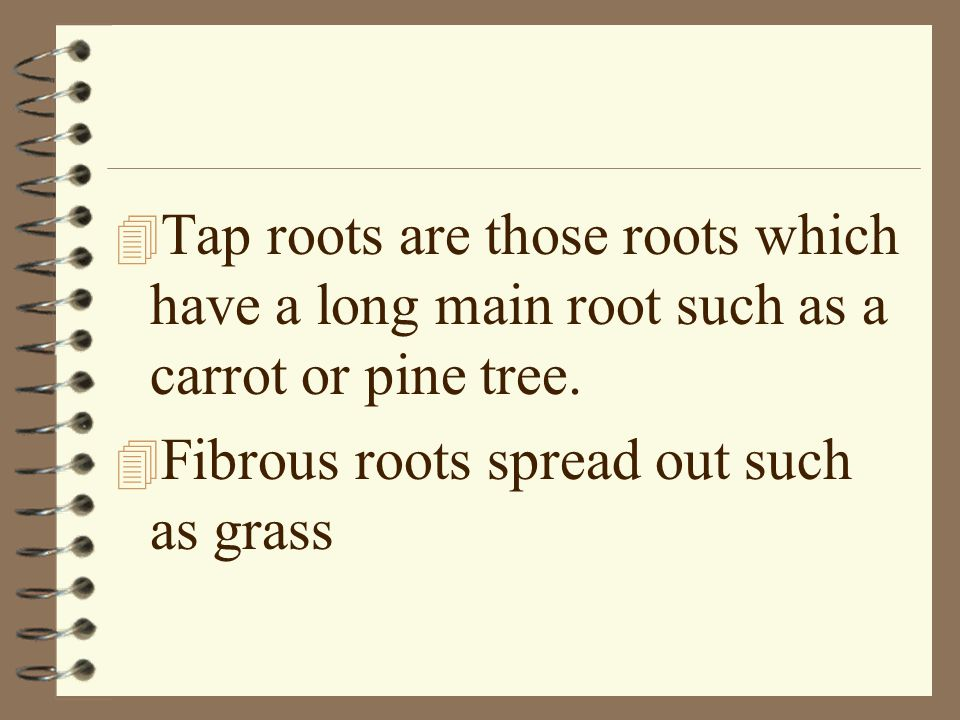 Tap roots are those roots which have a long main root such as a carrot or pine tree.