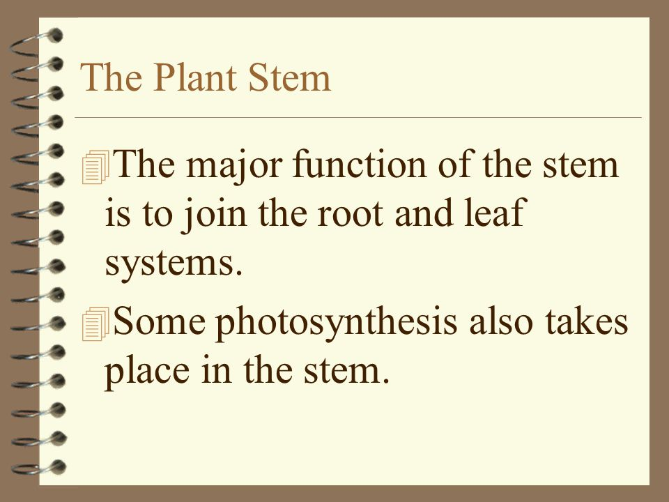 The Plant Stem The major function of the stem is to join the root and leaf systems.