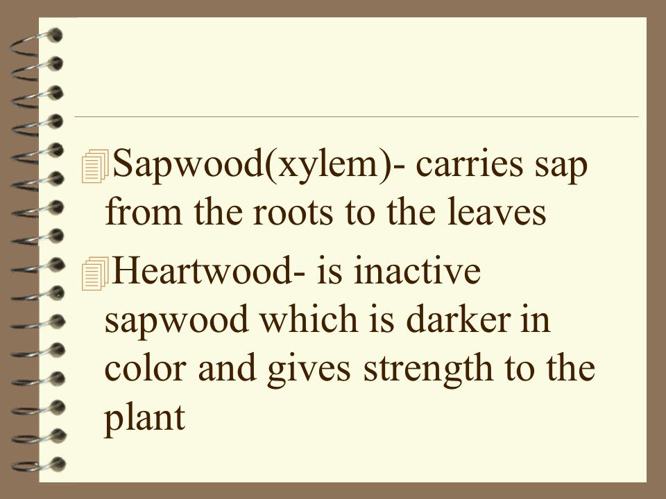 Sapwood(xylem)- carries sap from the roots to the leaves