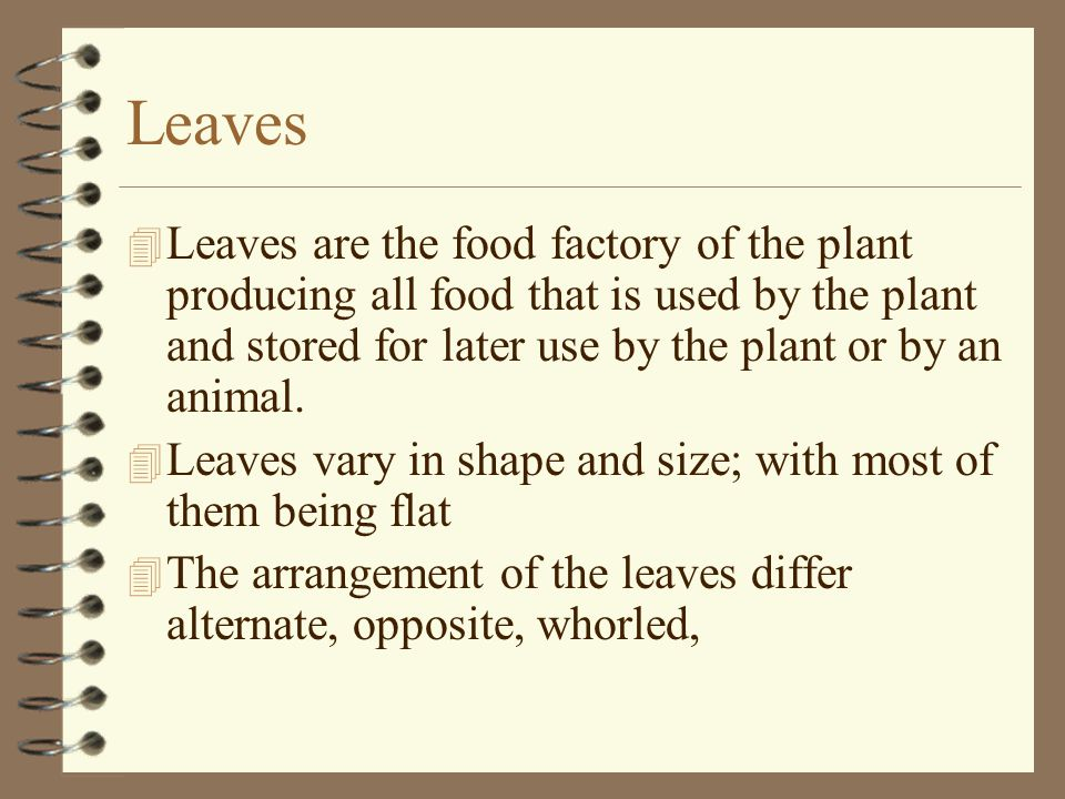 Leaves Leaves are the food factory of the plant producing all food that is used by the plant and stored for later use by the plant or by an animal.