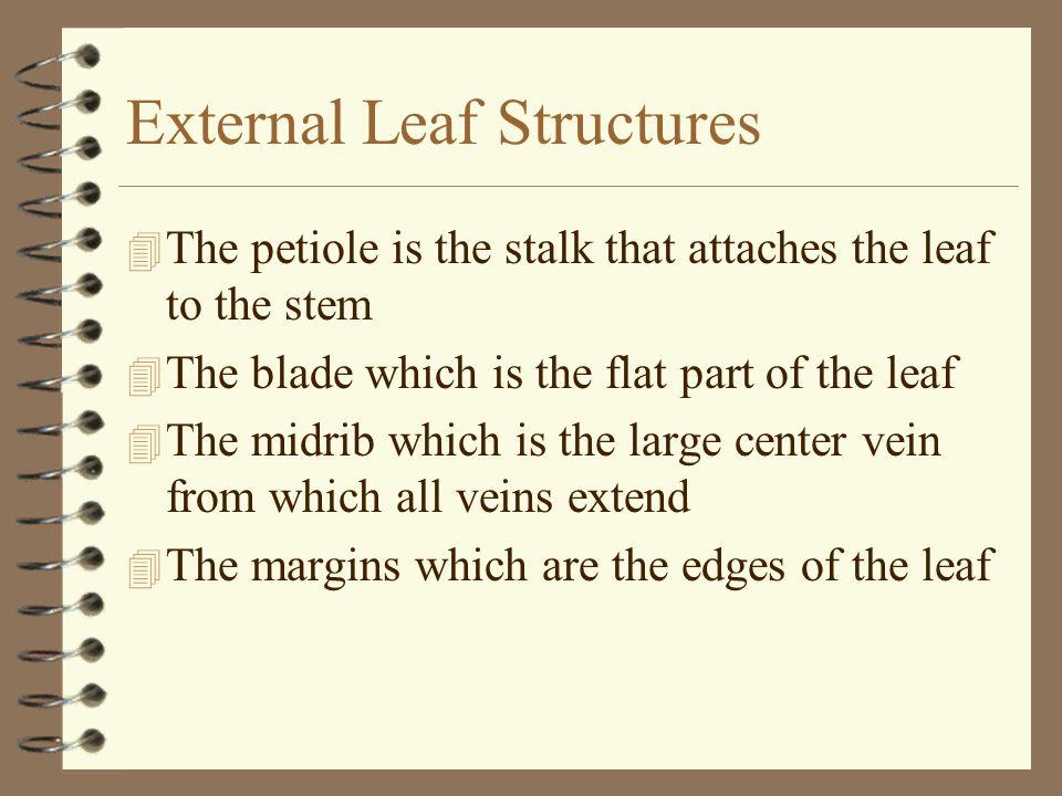 External Leaf Structures