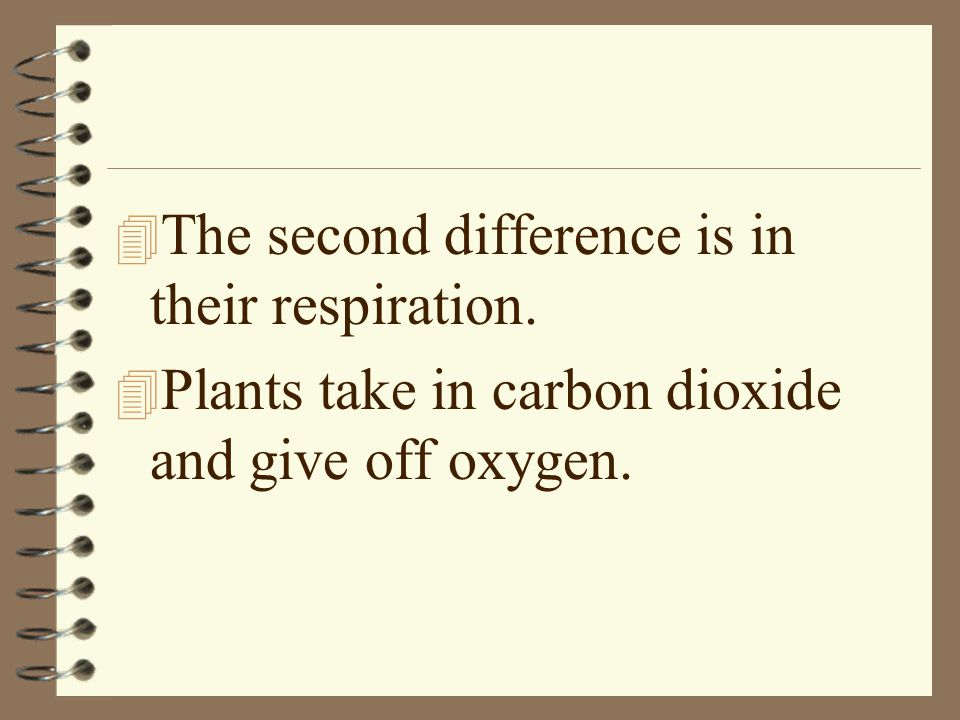 The second difference is in their respiration.