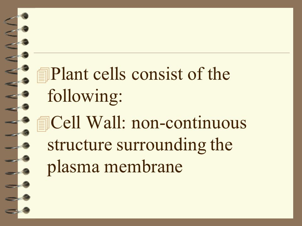 Plant cells consist of the following: