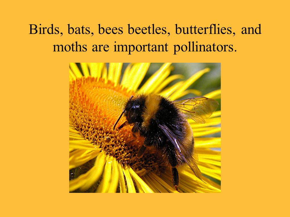 Birds, bats, bees beetles, butterflies, and moths are important pollinators.