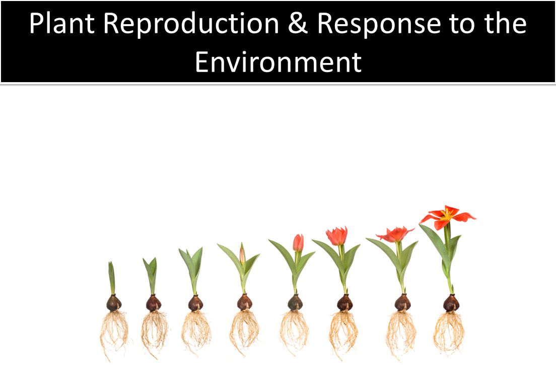 Plant Reproduction & Response to the Environment