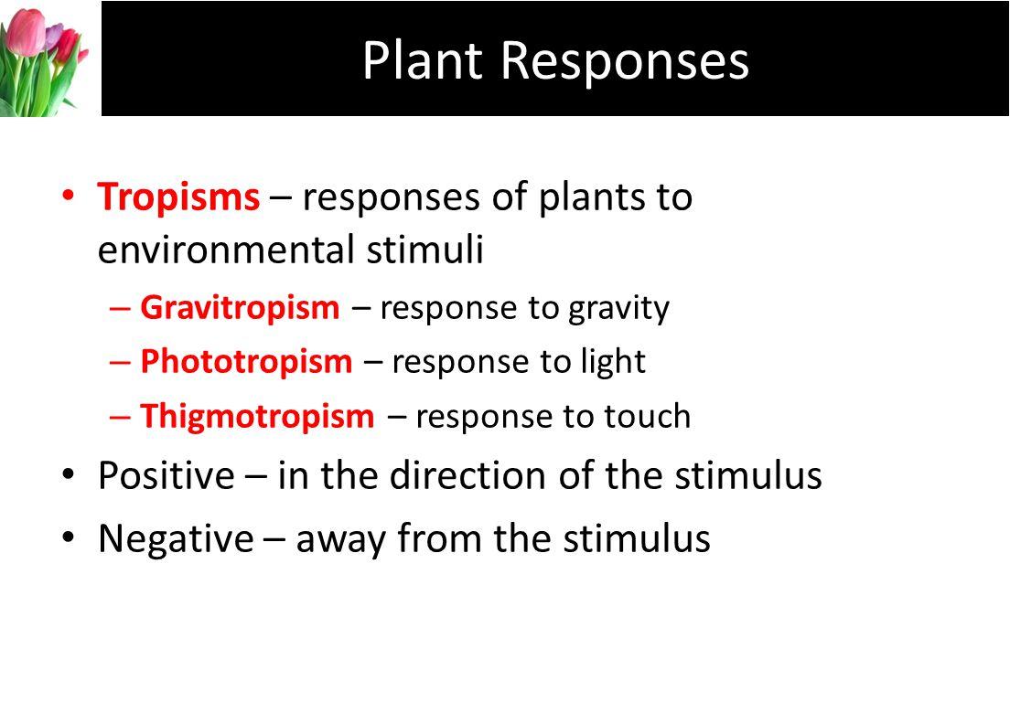 Plant Responses Tropisms – responses of plants to environmental stimuli. Gravitropism – response to gravity.