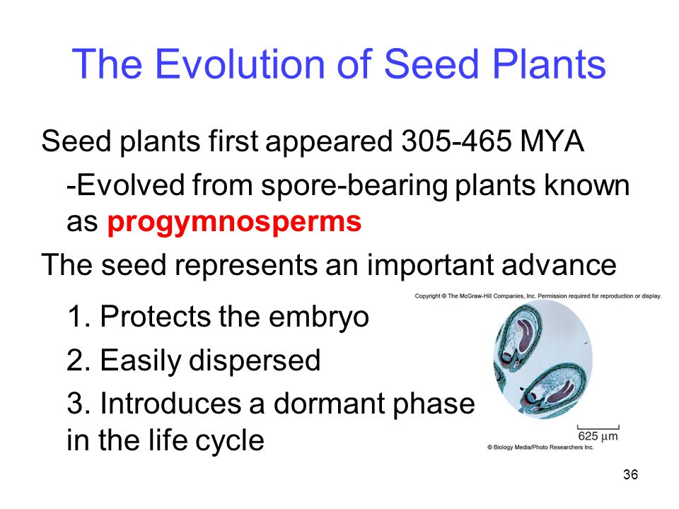 The Evolution of Seed Plants