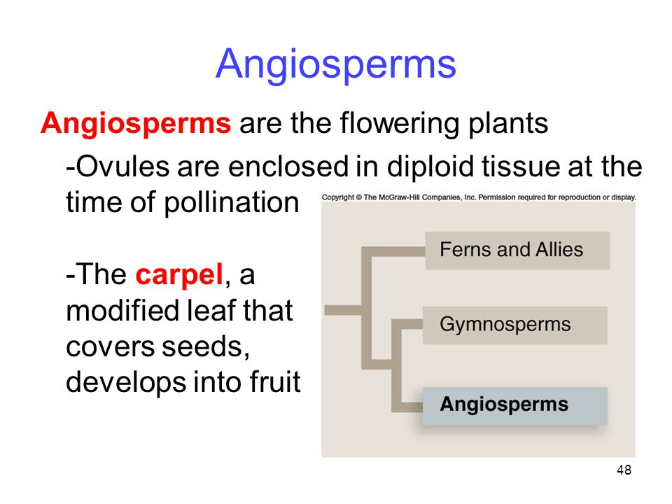Angiosperms Angiosperms are the flowering plants