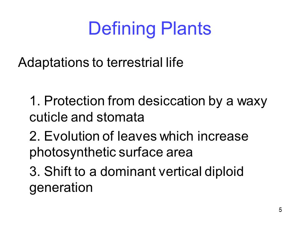 Defining Plants Adaptations to terrestrial life