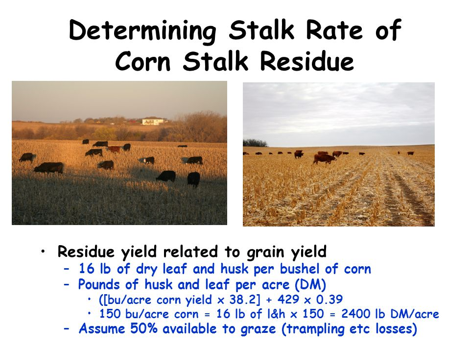 Determining Stalk Rate of Corn Stalk Residue
